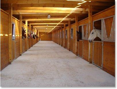 agréable écurie cso et pension et commerce de chevaux 35km de Paris, France